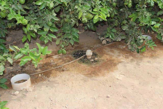 Uso eficiente del agua de riego
