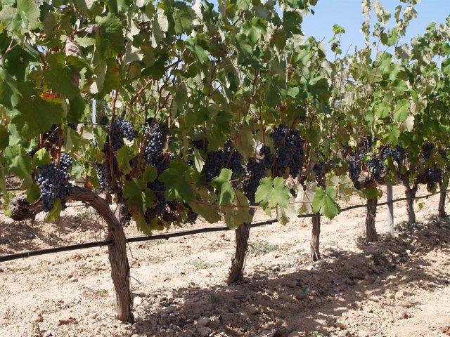 Huella Dactilar del vino