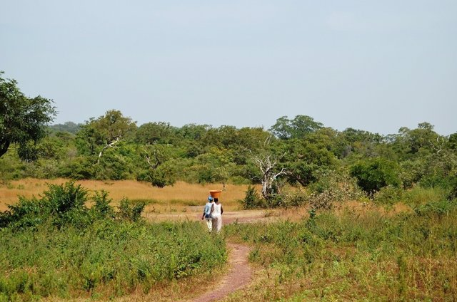 Cooperación forestal, programa UHU