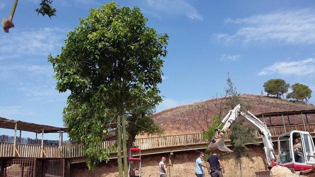 Instalación de nuevos árboles en Terra Natura Murcia