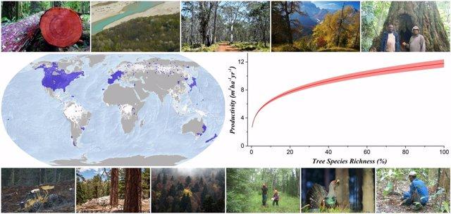 Investigadores analizan 777.126 áreas boscosas