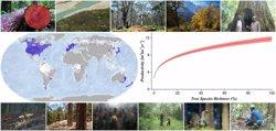 Demuestran que la pérdida de biodiversidad en los bosques reduce su productividad
