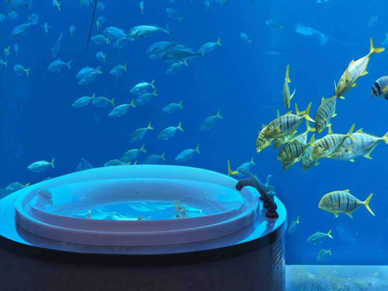 hoteles bajo el agua rel jate entre especies marinas