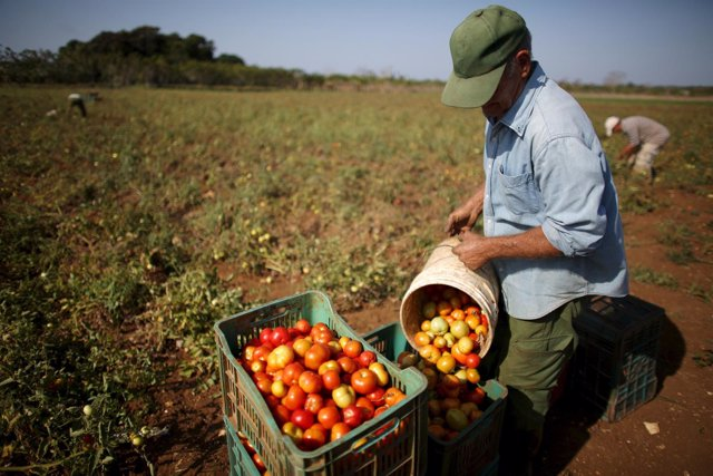 Agricultor cubano
