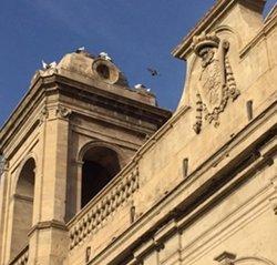 El Govern autoritza al Bisbat de Lleida a retirar nius de cigonya de la catedral (GOVERN)