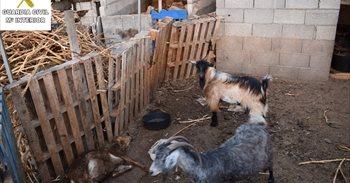 Investigan a una persona en La Palma por dejar morir a animales de hambre