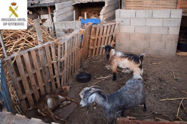Estado en el que fueron encontrados algunos de los animales