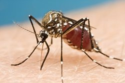 Sanitat registra el tercer cas congènit de Zika a Espanya (FLICKR)