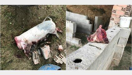 Detenidos cinco menores que torturaban animales y difundían sus grabaciones en redes sociales y Whatsapp