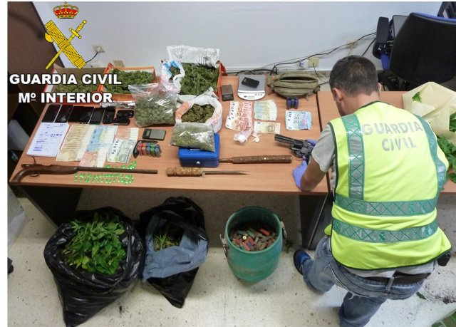 Desmantelado un punto de venta de drogas con 300 plantas de marihuana