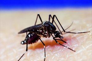 La novedosa técnica para combatir el Zika y el dengue que llegará a Brasil y Colombia