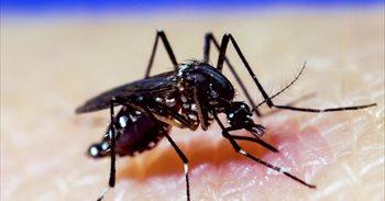 La novedosa técnica para combatir el Zika y el dengue que llegará a...
