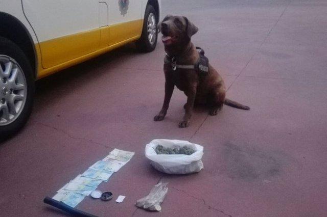 Un perro de la Policía Local de Badajoz con la droga encontrada
