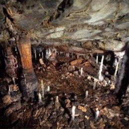 Cueva de La Garma