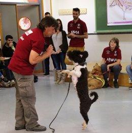 Terapia perro autistas UMA terapia alumnos alumnado universidad