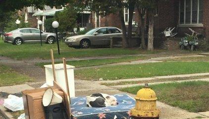 Un perro estuvo esperando un mes a sus dueños en el lugar donde le abandonaron
