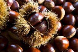 Mercabarna comercialitzarà 900.000 quilos de castanyes en la setmana de Tots Sants (THINKSTOCK)