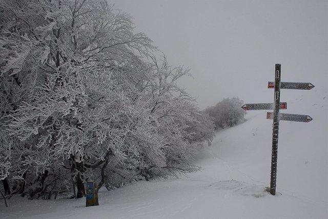 Camino de Santiago en la zona del collado de Lepoeder, Navarra.