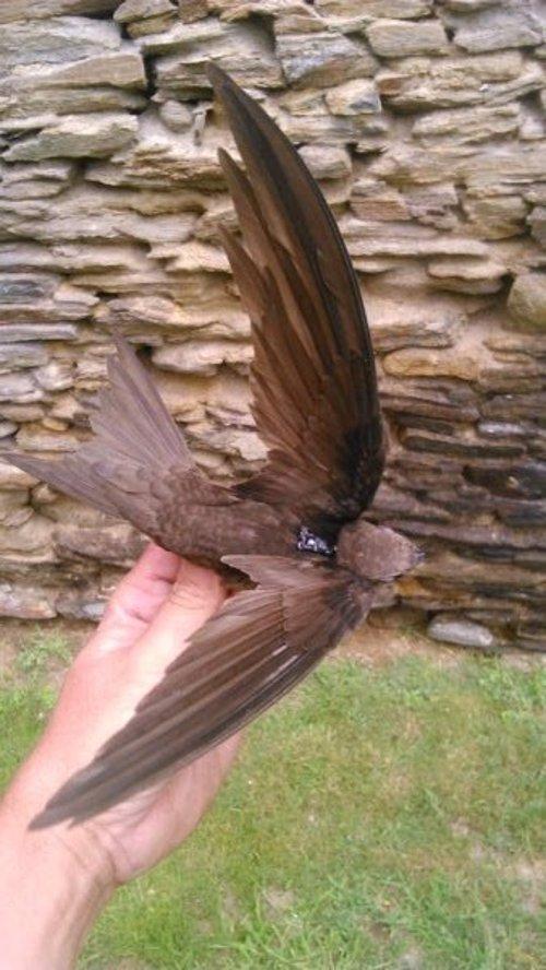 Resultado de imagen de Un total de 308 ejemplares de aves de 26 especies diferentes pueden seguirse en Internet a través del Programa Migra