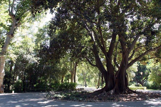 El parque de María Luisa.