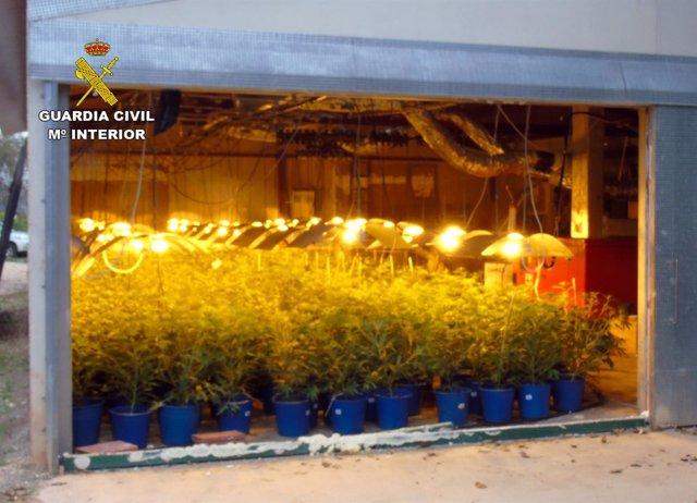 Cae En Bullas Un Grupo Delictivo Dedicado Al Cultivo Ilícito De Marihuana