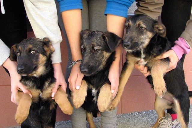 Perros para adopción Ayuntamiento de Málaga.