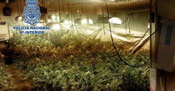 Detenidos los dos responsables de una plantación de marihuana...