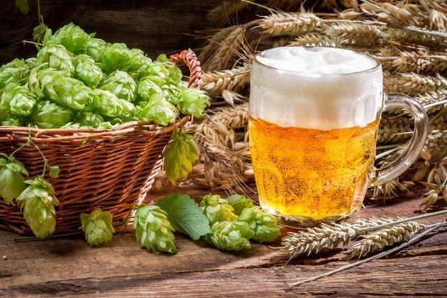 Lúpulo cerveza