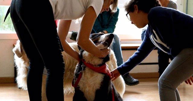 Np L'associacio Alba Busca Finançament Per Potenciar La Teràpia Amb Gossos