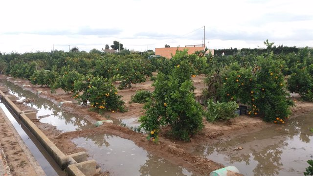 Cullera corta caminos rurales para evitar los robos de naranjas