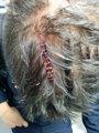 Foto: Tres policías fueron atendidos en el CIE de Murcia por brechas en la cabeza tras ser golpeados con barras de hierro