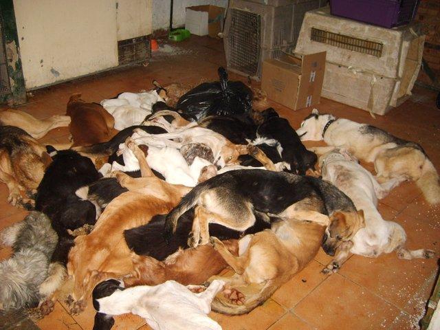 Animales sacrificados en la perrera de Puerto Real