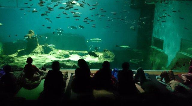 El Acuario de Sevilla inaugura la actividad 'Noche con Tiburones'