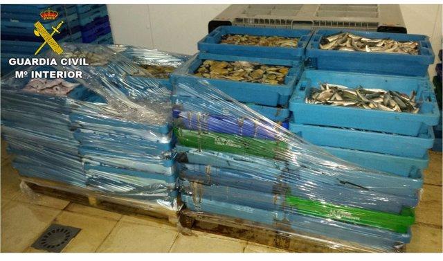 Intervienen en la Vila Joiosa más de media tonelada de pescado inmaduro