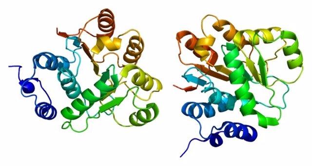 Proteína DDX6