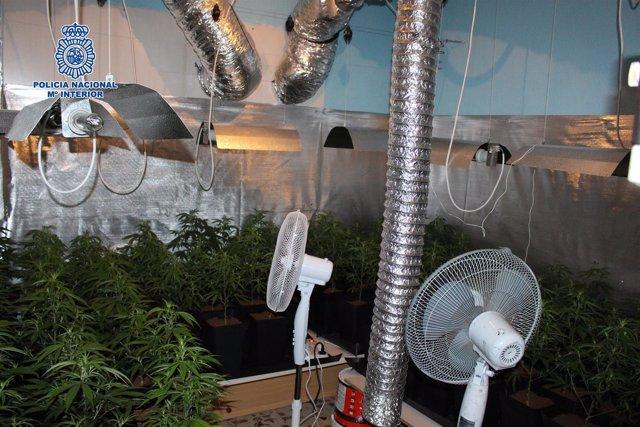 Nota De Prensa Y Dos Fotos Desmantelado Un Invernadero Laboratorio De Marihuana