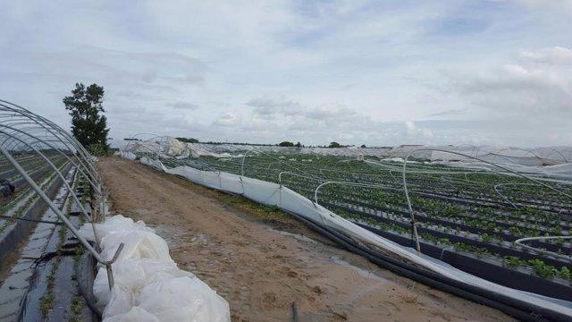 Un tornado daña la estructura de 40 hectáreas en Palos de la Frontera (Huelva).