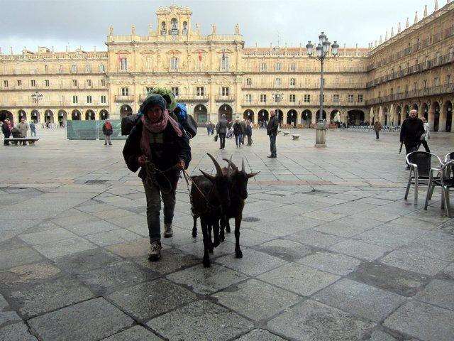 Joven francesa con dos cabras en la Plaza Mayor de Salamanca