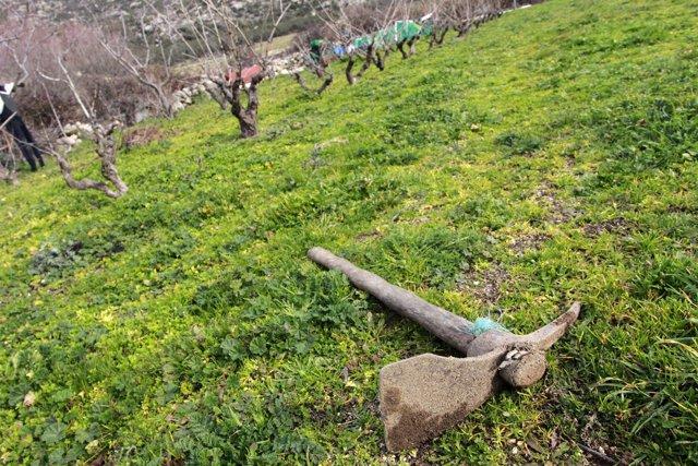 Campo, maquinaria agrícola, agricultor, agricultura, arado, arar