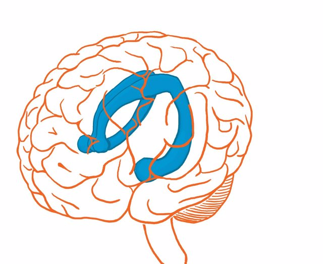 Hipocampo del cerebro