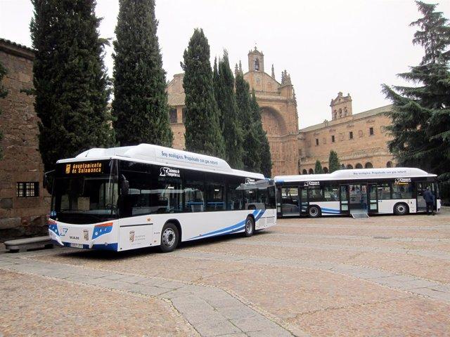 Nuevos autobuses municipales