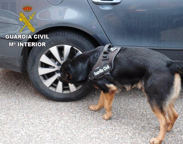 Un perro del servicio cinológico revisa un vehículo