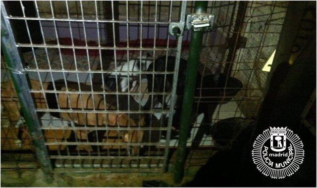 Rescatan a tres perras que vivían en lamentables condiciones en un trastero