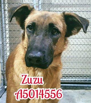 Perra Zuzu en una protectora de animales