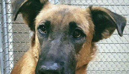 Un perro reconoce a la familia que le abandonó cuando fue a adoptar a otro a la protectora