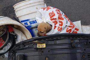 Como si fuera un desecho, tiran a un perrito a la basura en Costa Rica