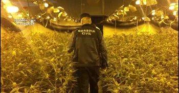 Detenido un grupo de ciudadanos chinos especializados en el cultivo de...