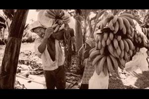La masacre de las bananeras, cuando la huelga no era un derecho