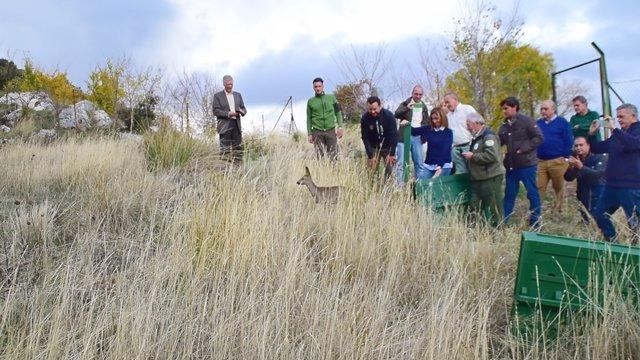 Nota Y Fotos Medio Ambiente Libera Dos Ejemplares De Corzos Andaluces En El Parq