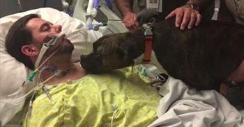 Las conmovedoras imágenes de un perro visitando a su dueño al hospital...